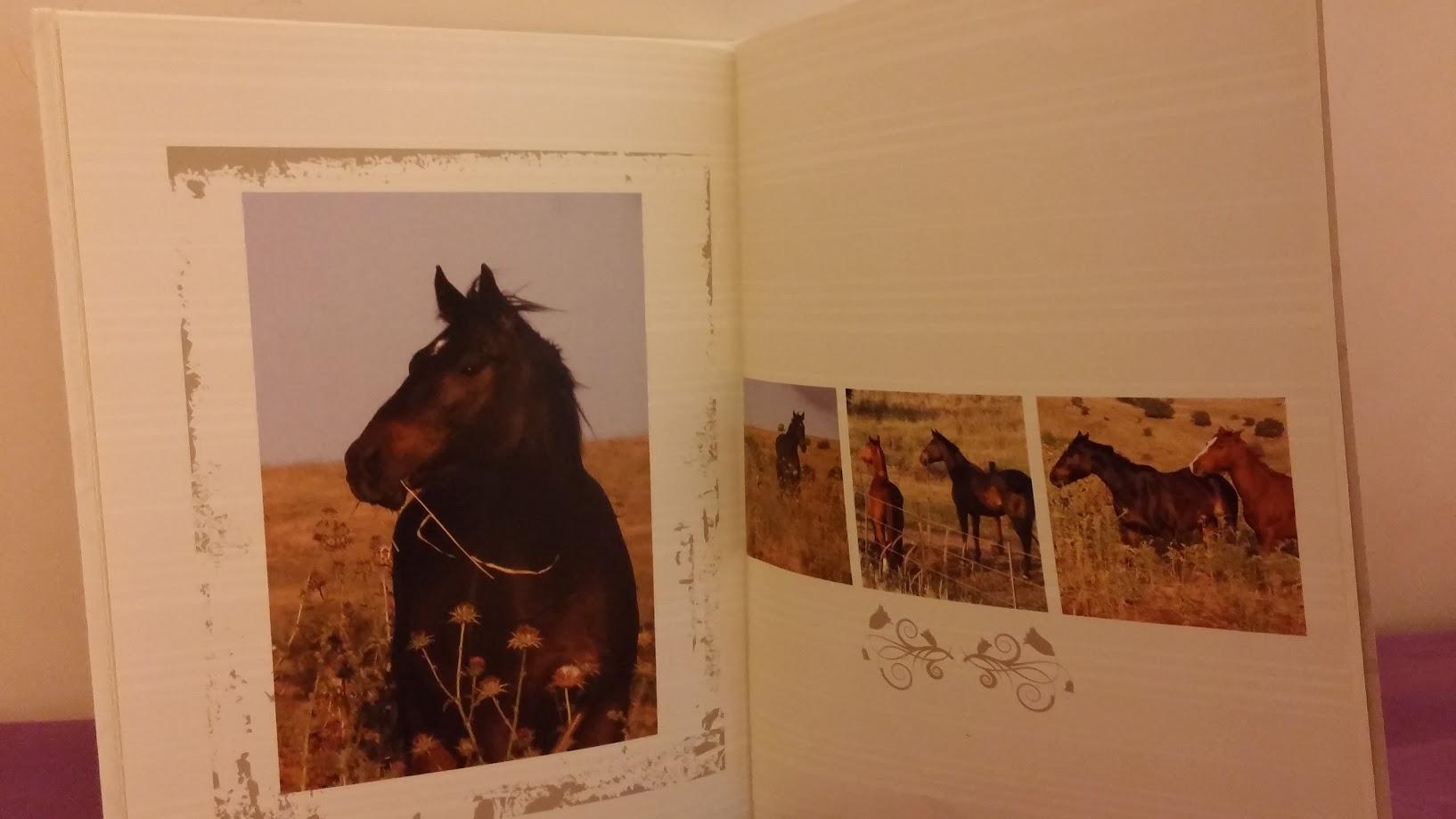 אלבום דיגיטלי סוסים - 'יהיה בסדר בצפון!'